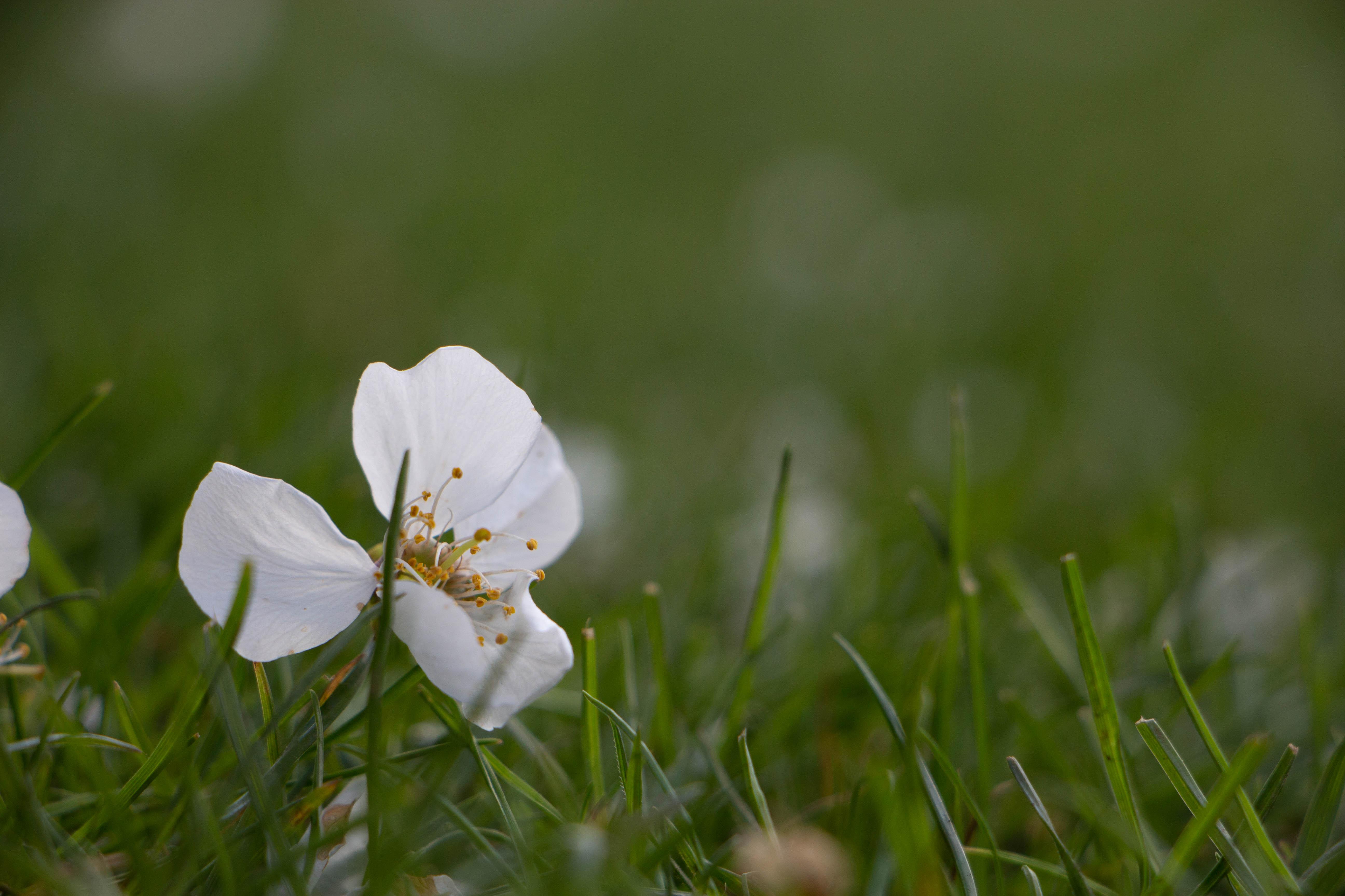 Blütenregen (1 von 1)