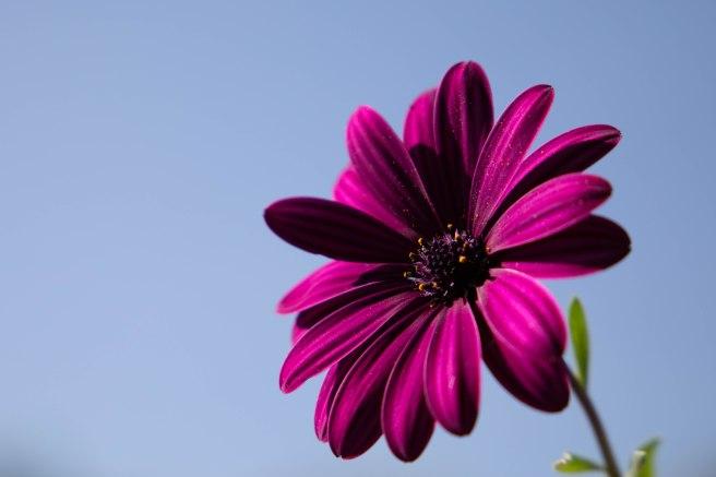 Pink (5 von 5)
